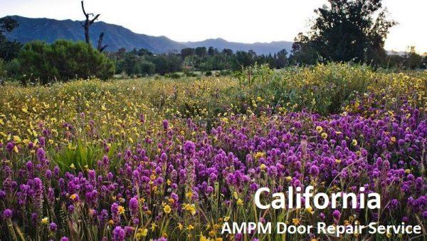 California-Springtime-Flowers